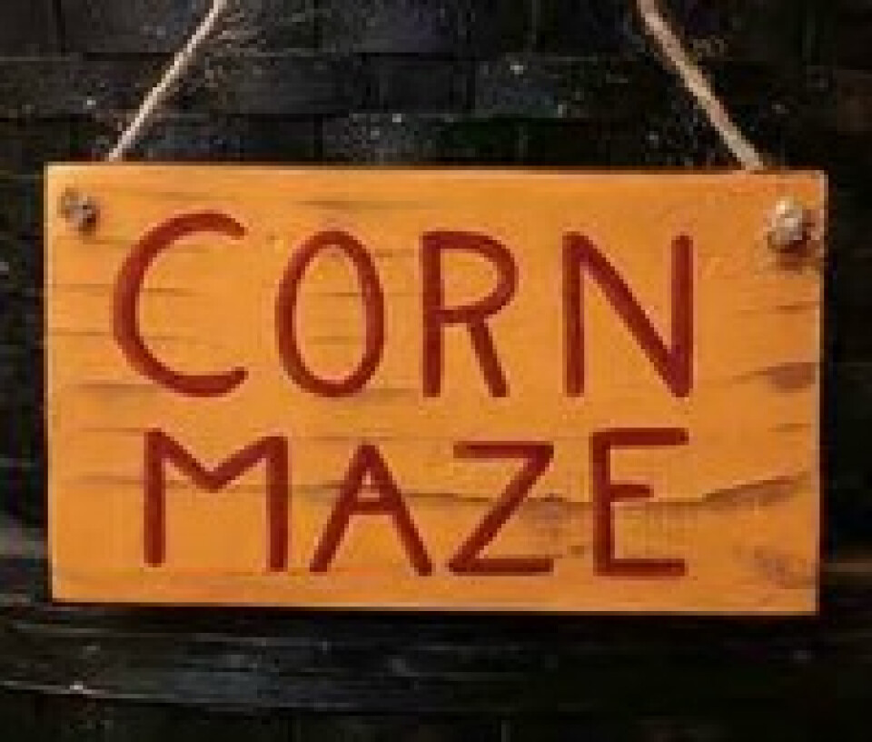 Corn Maze (MS Youth)